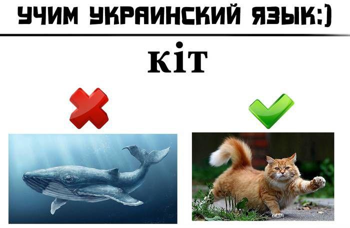 Веселый украинский язык или смешные украинские слова