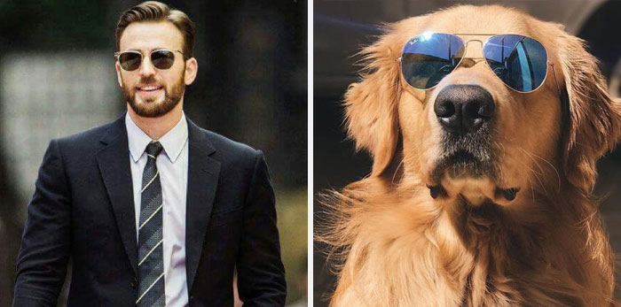 Someone Notices That Chris Evans Is Just Like A Golden Retriever, Creates A Twitter To Prove It