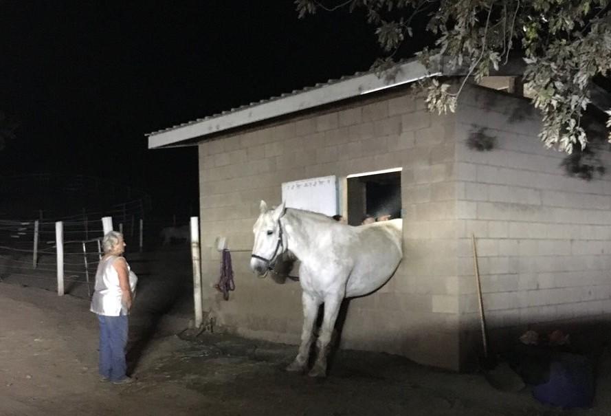Заскучавшая от одиночества лошадь застряла в окне конюшни