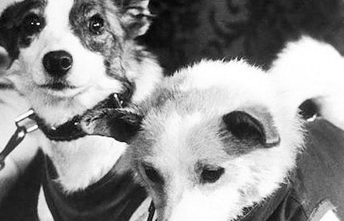 Лайка: трагедия первой собаки в космосе