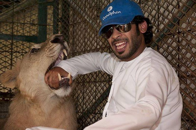 catsncars25 Хищные кошечки и дорогие машины: досуг арабского миллионера