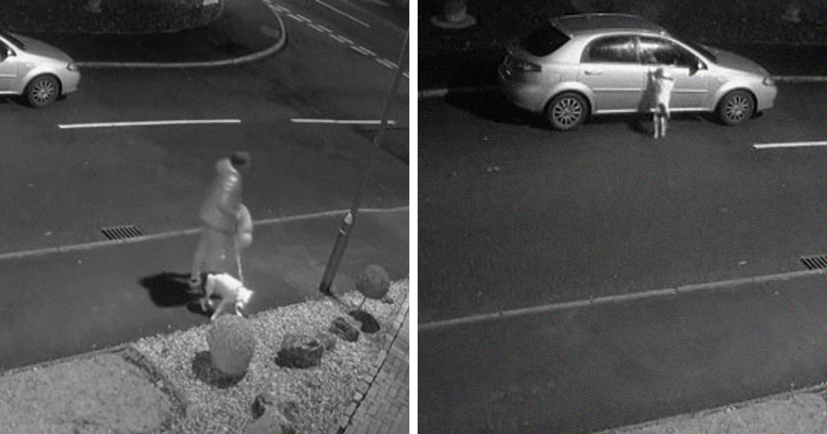 Dog Desperately Tries To Get Into The Car After Owner Dumps It On The Roadside