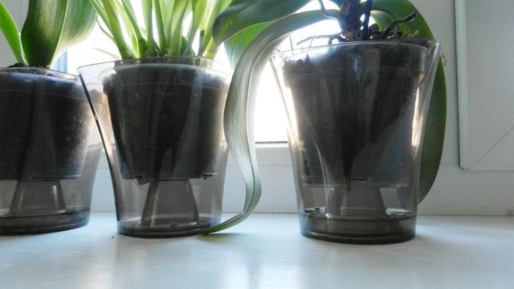 Горшок для орхидеями в домашних условиях