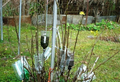 Интересный и забытый способ размножать деревья