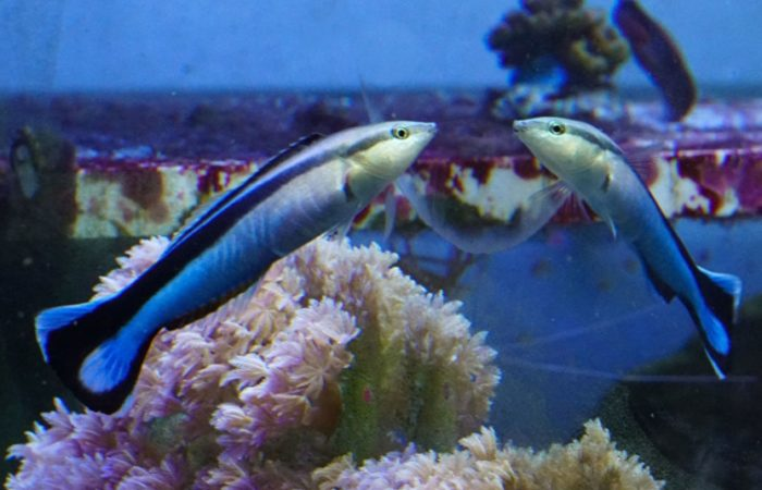Рыбки-губаны оказались «разумными» существами, выяснили ученые