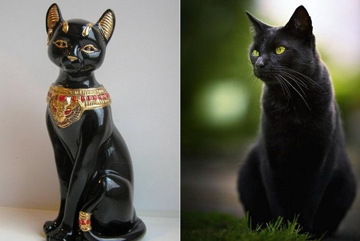 Исчадия дьявола или те, кто приносит удачу: черные кошки в культурах разных народов