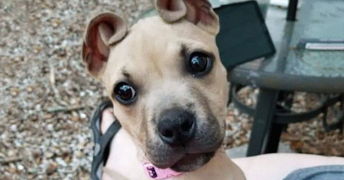 This Rescued Puppy Has Cinnamon Roll Shaped Ears And People Are In Love