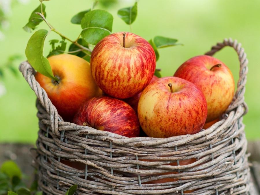 О яблонях в вопросах и ответах