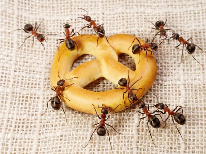 3 способа, как избавиться от муравьев в доме
