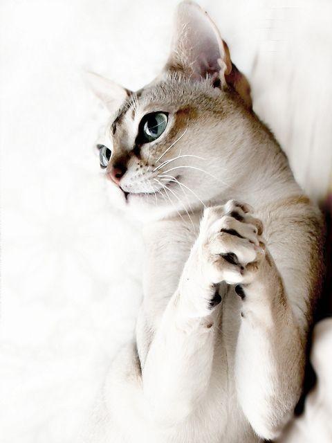 Мечтать коты, милота, поведение, счастье, эмоции