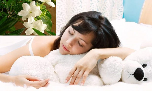 Цветок на подоконнике — и сон нам обеспечен