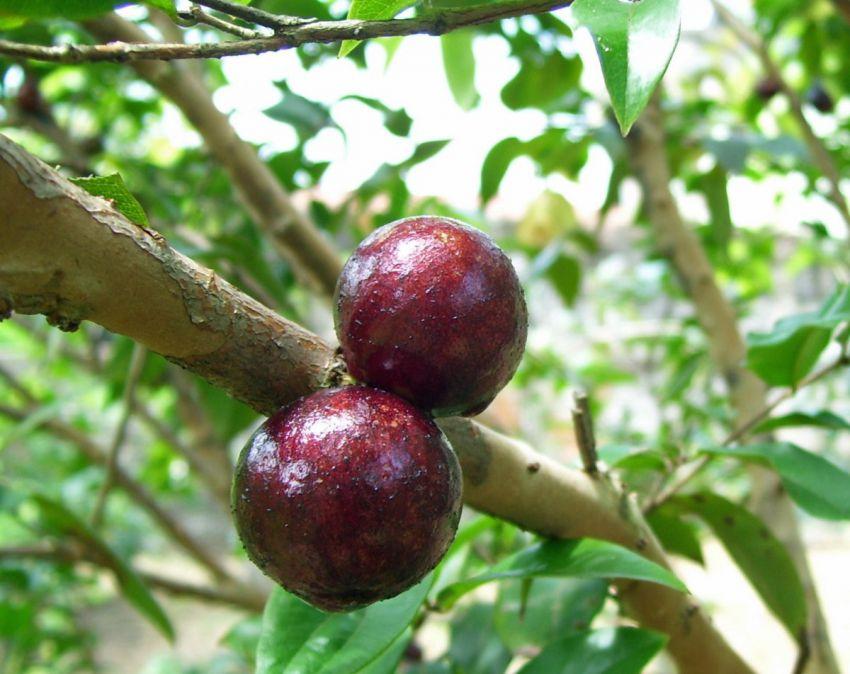 фрукт, витамин, экзотика