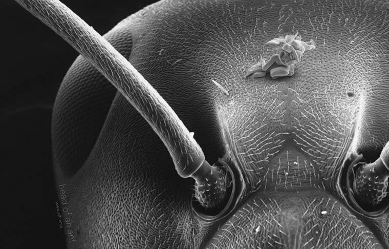 Нано-скульптуры Джонти Гурвица. Самые микроскопические фигуры людей в мире-1