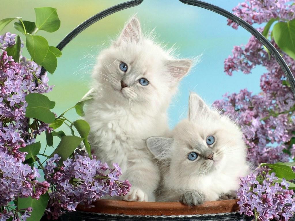 Котята в цветах