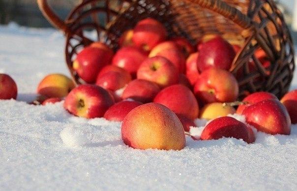 Картинки яблоки на снегу