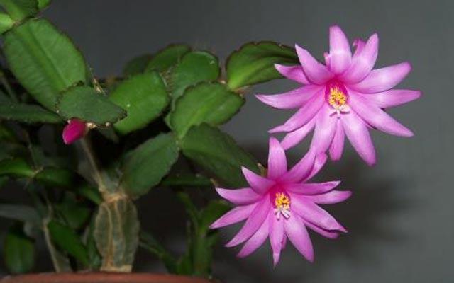 plants0115-8.jpg