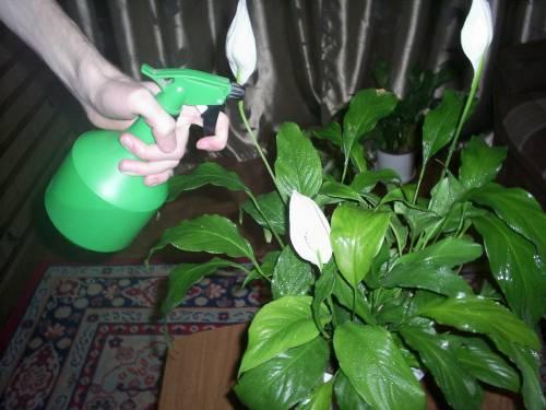 комнатные растения для доу фото и названия Интересная подборка