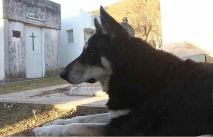 Собачья верность. Капитан - пес, который приходит на могилу своего хозяина вот уже 11 лет