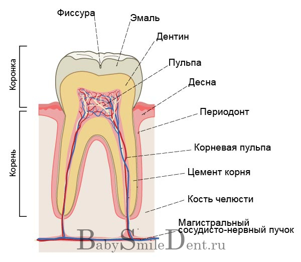 Наши зубки).