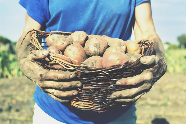 Кормим растения, чтобы потом они кормили нас