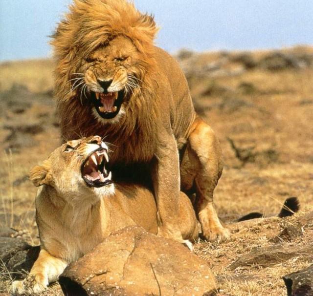 Сексуальные отношения женщина лев
