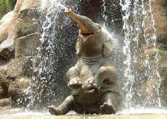 Живут слоны 50-70 лет