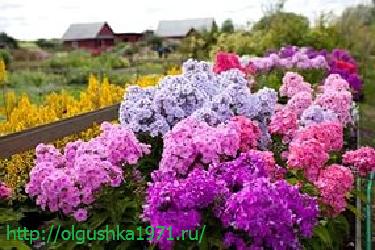 Цветы в саду цветут песня