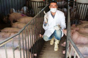 «Мы едим мясо с целым набором антибиотиков». Эксперт — о рационе россиян