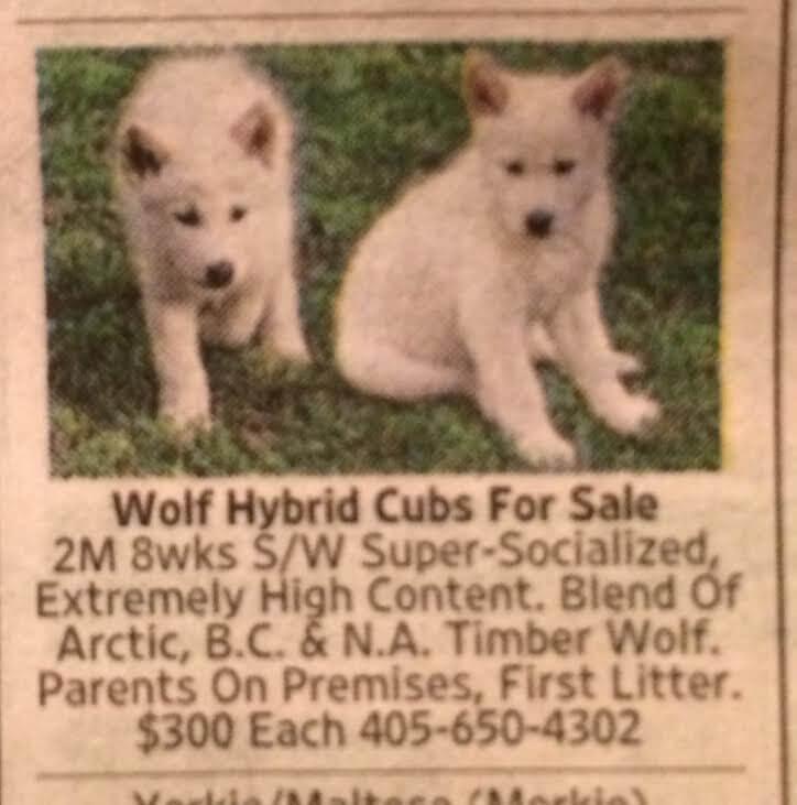 Она купила щенков по объявления в газете. Только потом она узнала, как ошиблась…