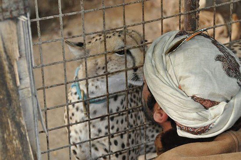 catsncars19 Хищные кошечки и дорогие машины: досуг арабского миллионера