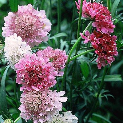 Цветы для начинающих