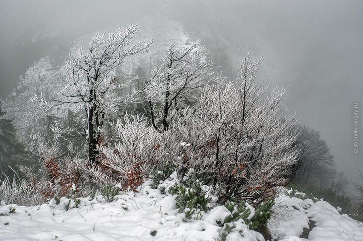Фото Сергея Странника - Фото Сергея Странника - ноябрь 2