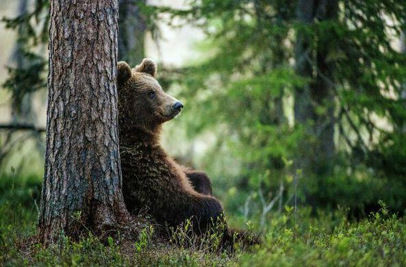 В США медведь попытался проникнуть в дом