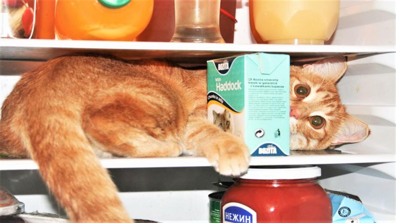 Спецвыпуск Про Животных Коты и Холодильник