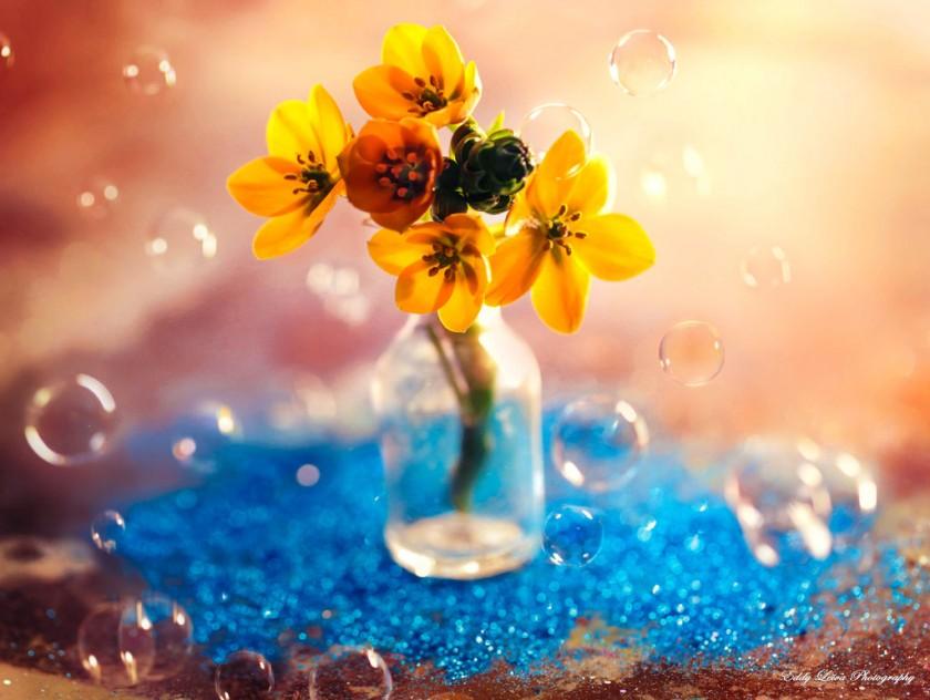 Экстраординарные фотографии цветов