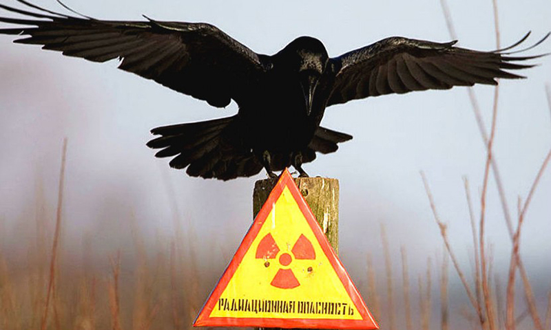 26 апреля - Годовщина чудовищной катастрофы в Чернобыле