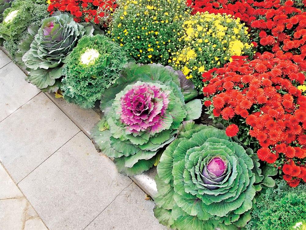 Декоративные овощи на газоне – почему бы и нет?