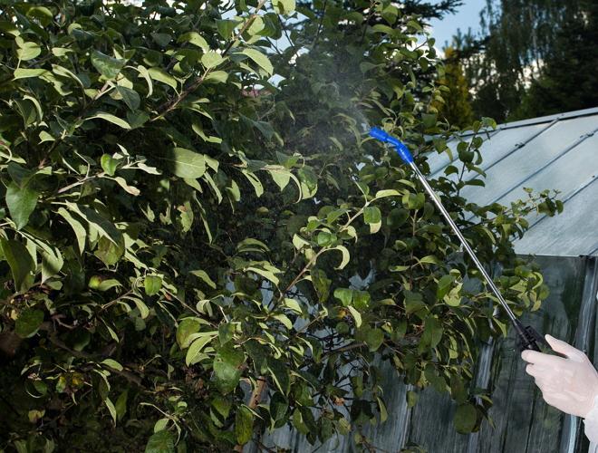 Для чего в саду и огороде применяют медный купорос?