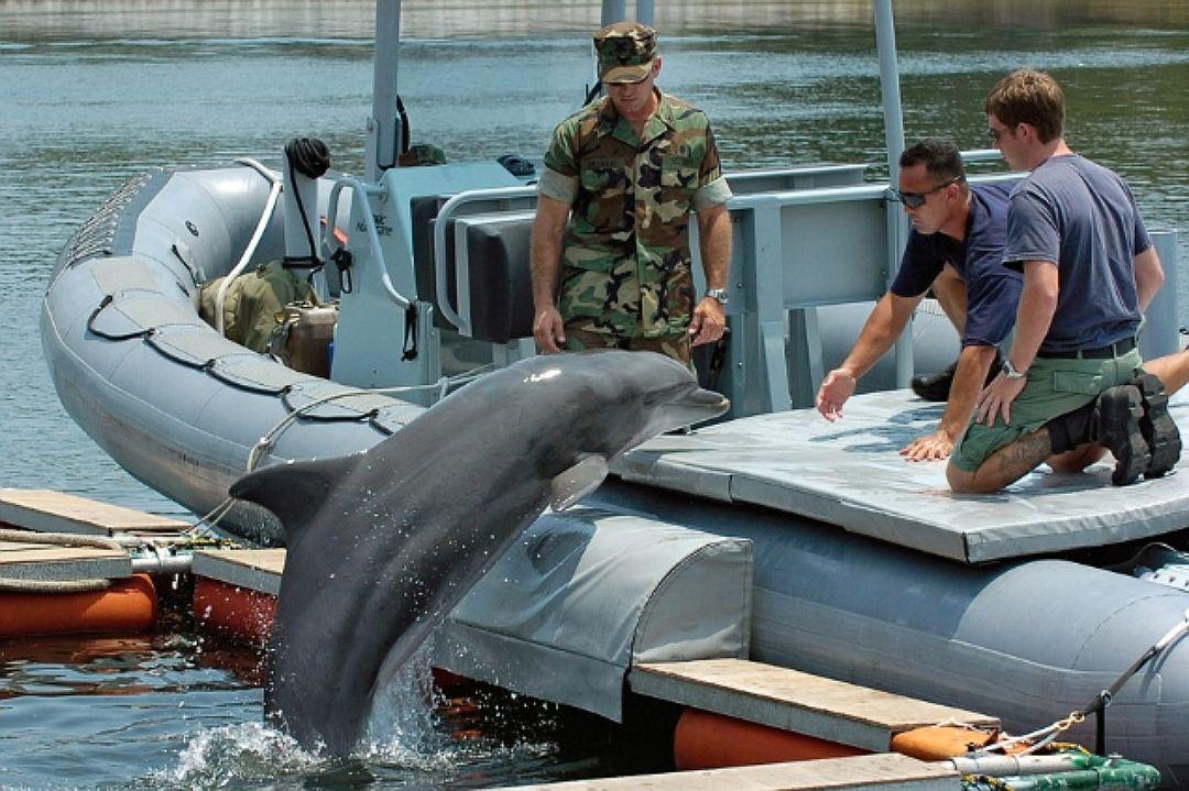 """""""После пары смертельных случаев дельфины отказывались подчиняться приказам""""..."""