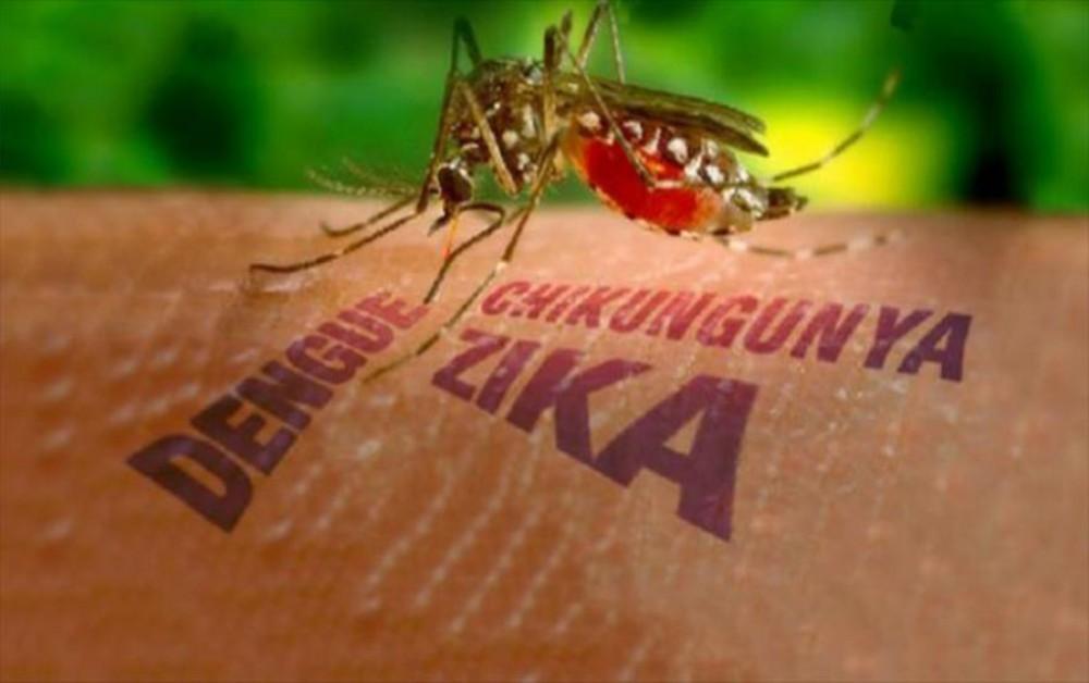 У Путина даже комары под контролем: немецкий журналист рассказал о России