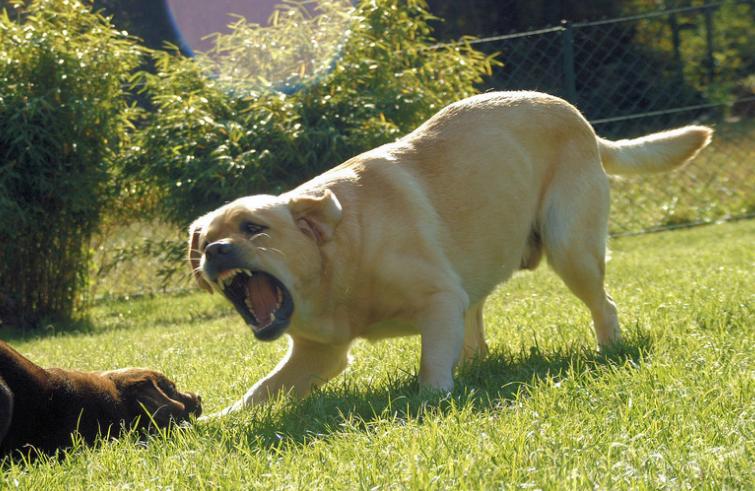 Когда пес увидел, что случилось с его маленькой хозяйкой, ничто не могло его удержать.