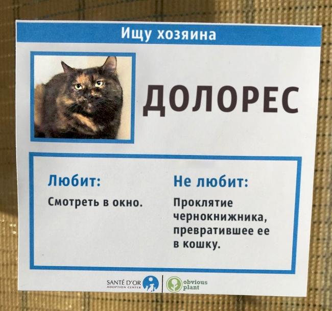 Приют для кошек придумал нео…