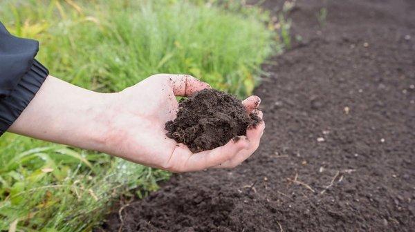3 шага: как сделать почву плодородной