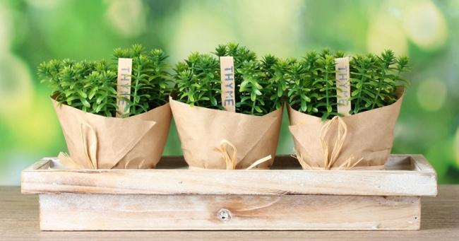 Хочется иногда выйти на балкон, как Джейми Оливер, набрать собственноручно выращенные овощи и травы и замутить из них нечто сног
