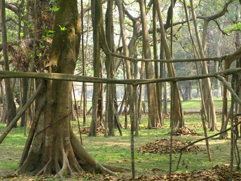 forests39 Леса с другой планеты!