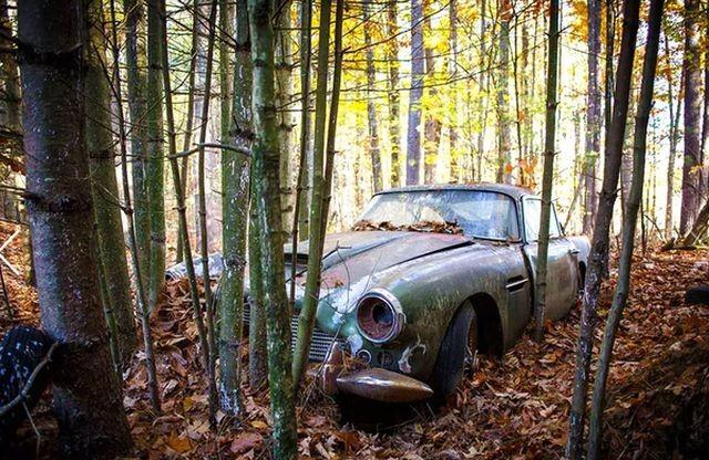 Находка в лесу ценной в 250 …