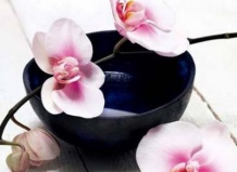 Пересадка орхидей: шаг за шагом