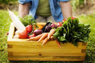Овощи по-новому. Какие блюда приготовить из сезонных даров природы?