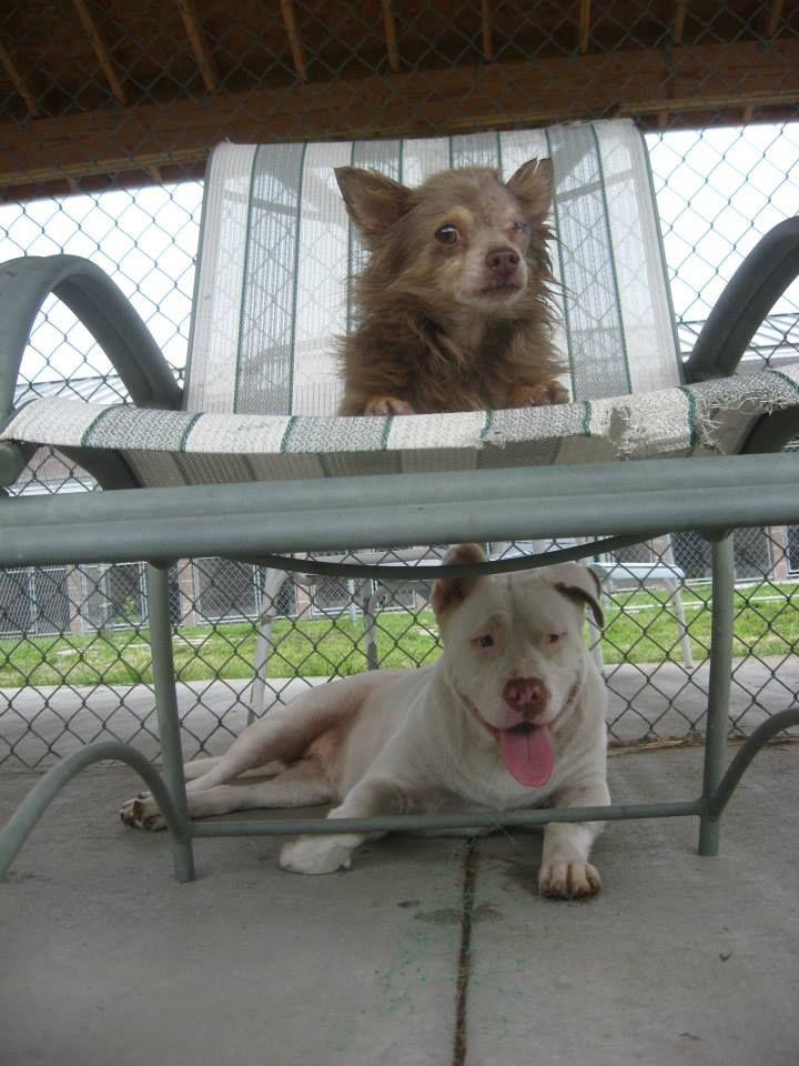 Трогательная дружба двух бродячих собак