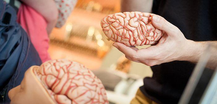 7 привычек, из-за которых ваш мозг буквально уменьшается